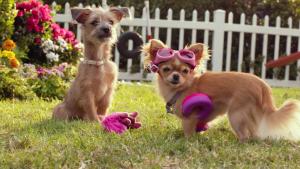 Czi³a³a z Beverly Hills 3 / Beverly Hills Chihuahua 3: Viva La Fiesta (2012) PL.720p.BDRip.XviD.AC3-ELiTE / Lektor PL
