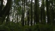 Trailers / Clips / Spots de Amanecer Part 2 - Página 4 1e0863215994172