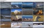 Nied�wied� polarny / Ice Bear (2012) PL.TVRip.XviD / Lektor PL
