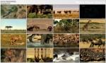 Wielka Równina Serengeti / The Great Serengeti (2010) PL.DVBRip.XviD / Lektor PL