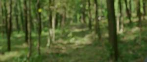 Go Goa Gone (2013) SUB.PL.480p.HDRip.XviD.AC3-optiva / Napisy PL + RMVB + x264