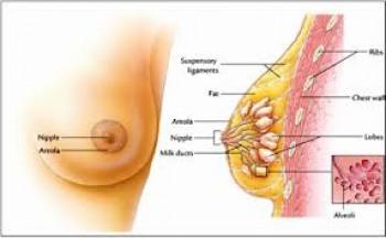 Kanker payudara pada wanita - Ist